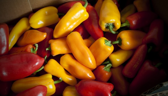 Locally grown mixed Ramiro peppers