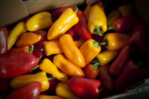 Herefordshire grown Ramiro peppers