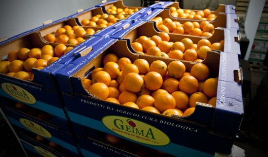 Organic oranges ready to go out to our customers. A quick turn around ensures top quality