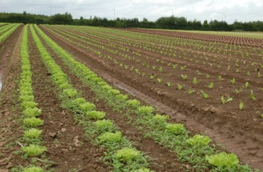 Organic farming in Herefordshire