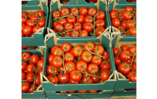 Fresh organic tomatoes - We source locally whenever possible