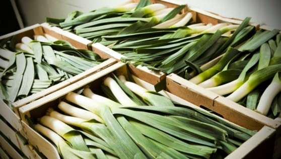 Fresh leeks at wholesale prices. Contact Us for a current price list.